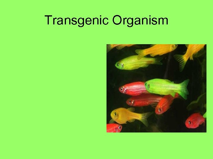 Transgenic Organism