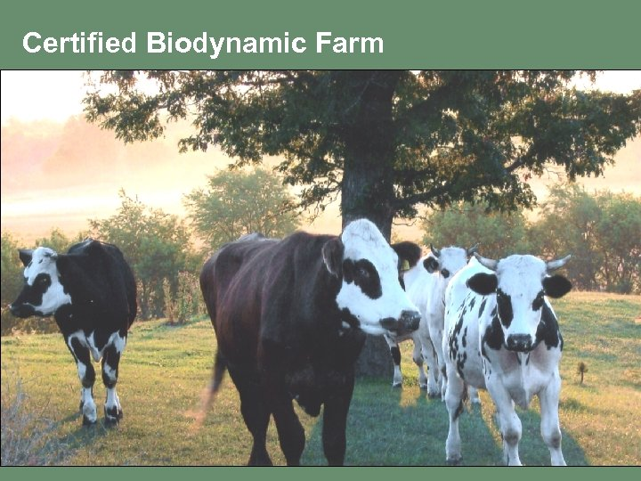 Certified Biodynamic Farm