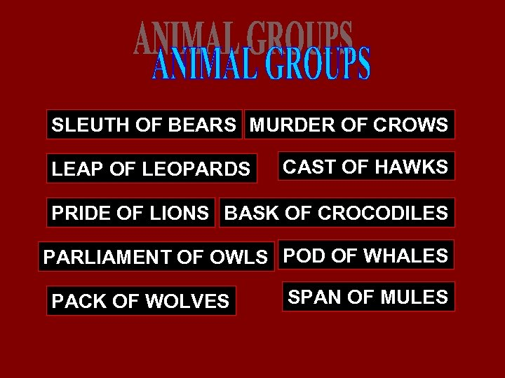SLEUTH OF BEARS MURDER OF CROWS LEAP OF LEOPARDS CAST OF HAWKS PRIDE OF