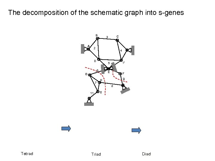 The decomposition of the schematic graph into s-genes B A 2 4 D 6