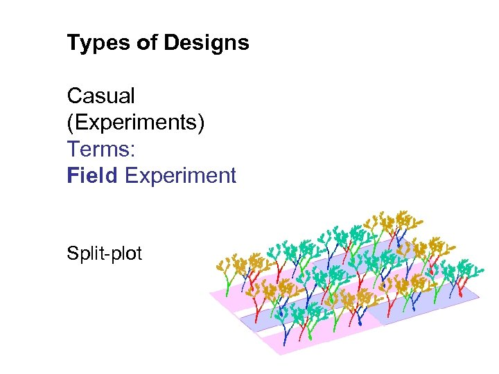 Types of Designs Casual (Experiments) Terms: Field Experiment Split-plot