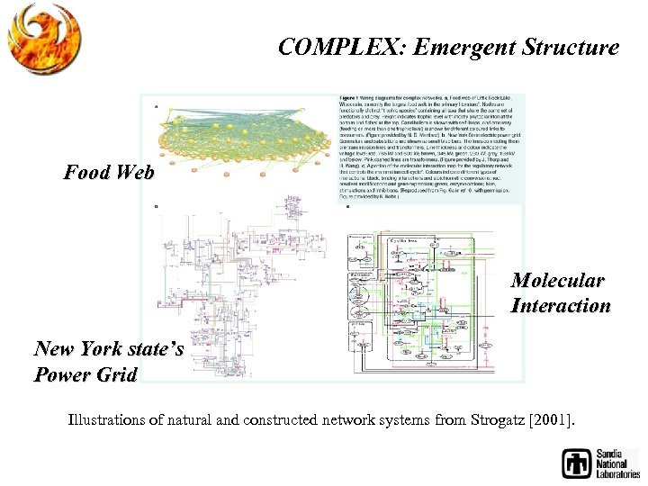 COMPLEX: Emergent Structure Food Web Molecular Interaction New York state's Power Grid Illustrations of