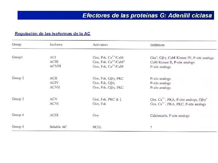 Efectores de las proteínas G: Adenilil ciclasa Regulación de las isoformas de la AC