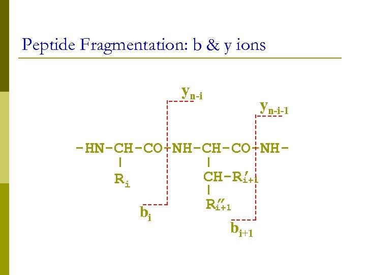 """Peptide Fragmentation: b & y ions yn-i-1 -HN-CH-CO-NHCH-R' i+1 Ri bi R"""" i+1 bi+1"""