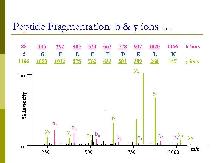 Peptide Fragmentation: b & y ions … 88 S 1166 145 G 1080 292