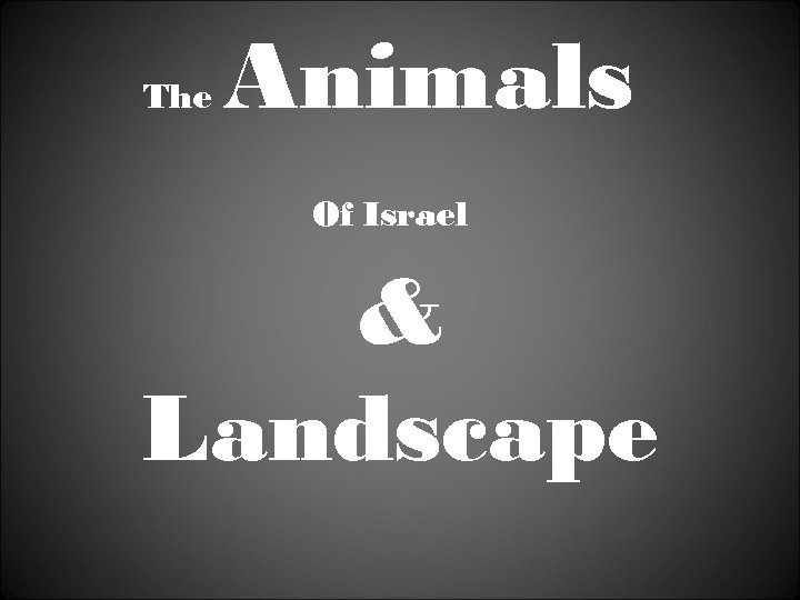 The Animals Of Israel & Landscape