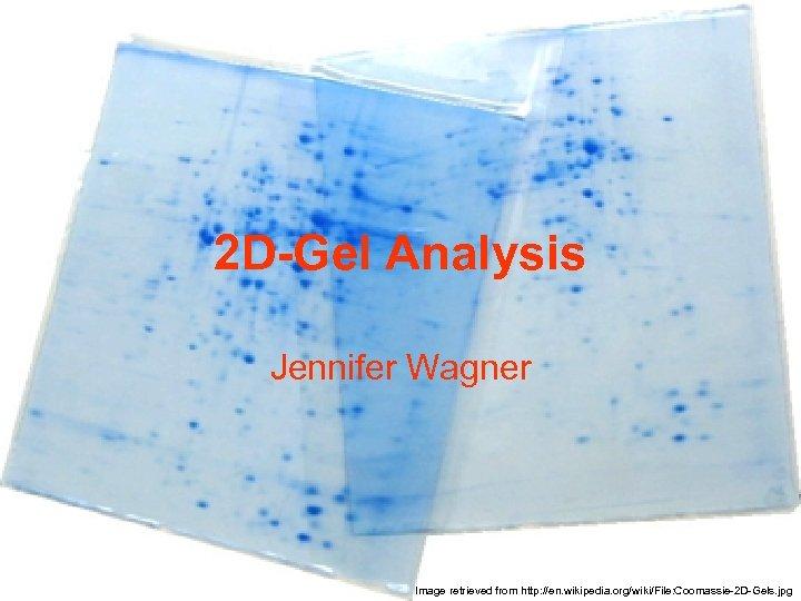 2 D-Gel Analysis Jennifer Wagner Image retrieved from http: //en. wikipedia. org/wiki/File: Coomassie-2 D-Gels.