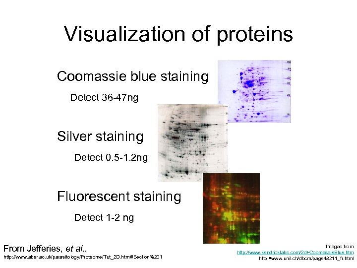 Visualization of proteins Coomassie blue staining Detect 36 -47 ng Silver staining Detect 0.