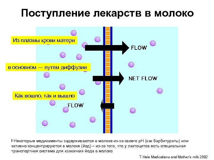 Поступление лекарств в молоко Из плазмы крови матери в основном ― путем диффузии Как