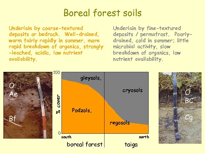 Boreal forest soils Underlain by coarse-textured deposits or bedrock. Well-drained, warm fairly rapidly in