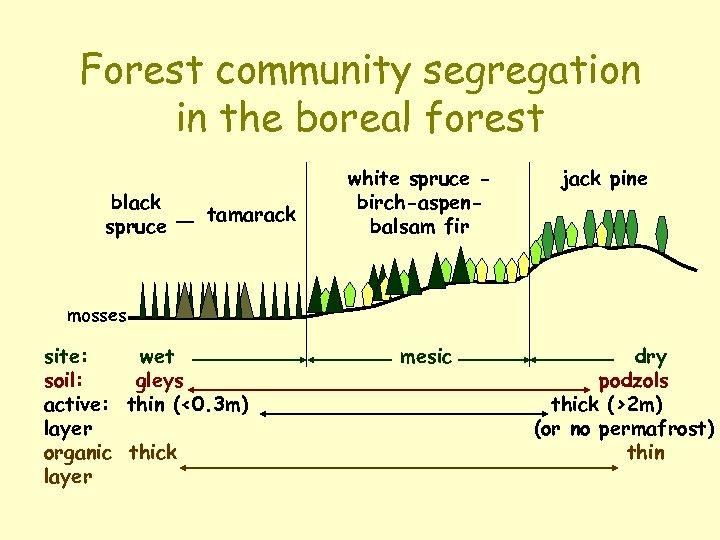 Forest community segregation in the boreal forest black spruce tamarack white spruce birch-aspenbalsam fir