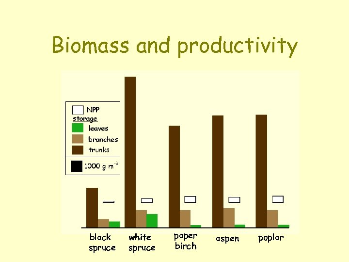 Biomass and productivity black spruce white spruce paper birch aspen poplar