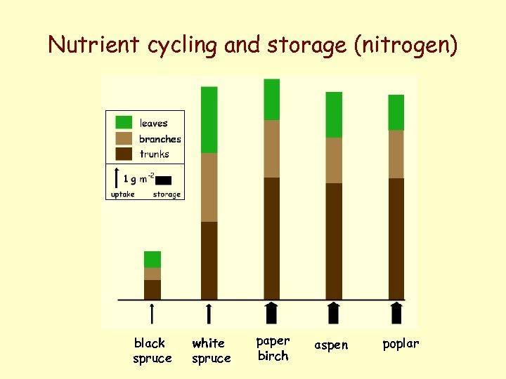 Nutrient cycling and storage (nitrogen) black spruce white spruce paper birch aspen poplar