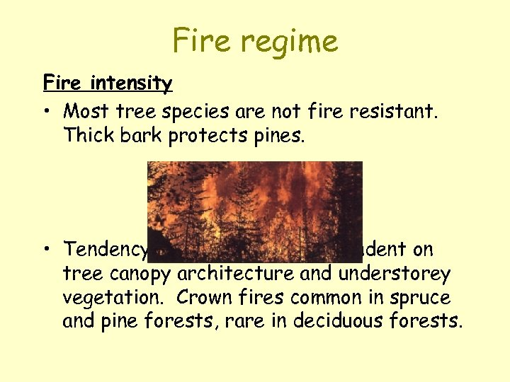 Fire regime Fire intensity • Most tree species are not fire resistant. Thick bark