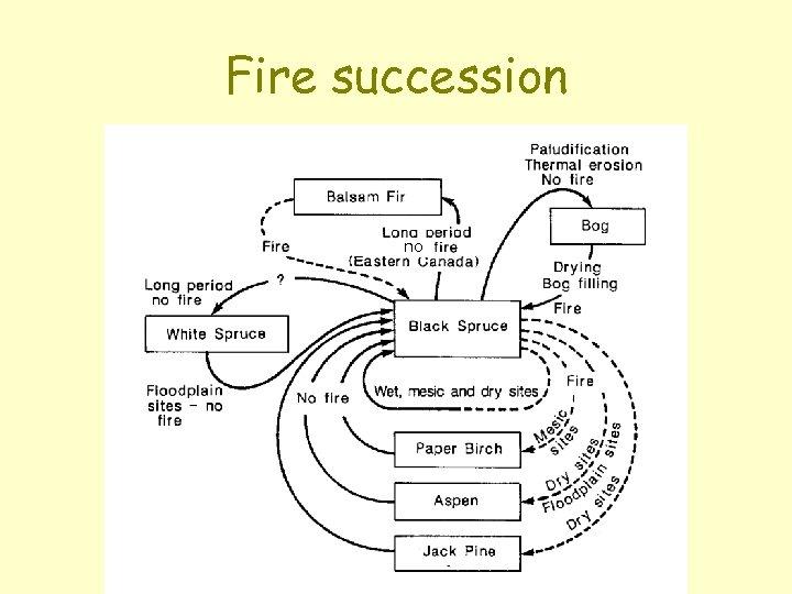 Fire succession no