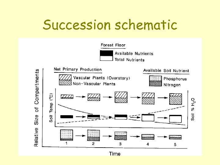 Succession schematic