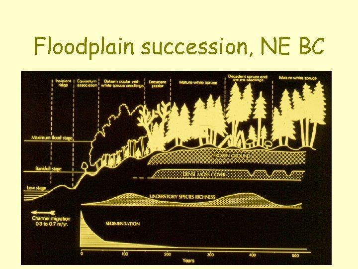 Floodplain succession, NE BC