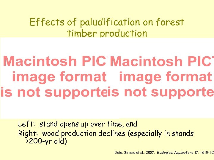 Effects of paludification on forest timber production Left: stand opens up over time, and