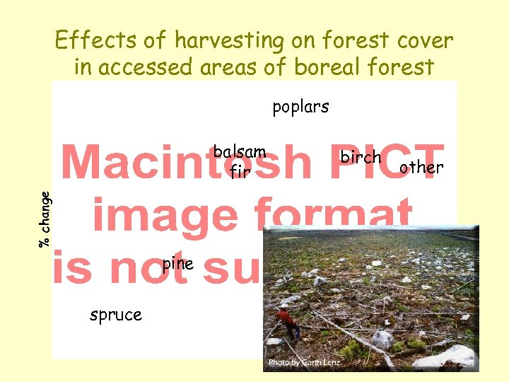 Effects of harvesting on forest cover in accessed areas of boreal forest poplars %