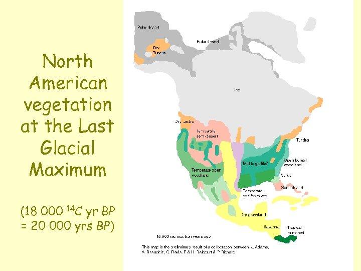 North American vegetation at the Last Glacial Maximum (18 000 14 C yr BP