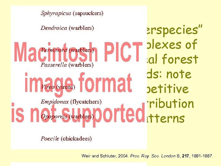 Sphyrapicus (sapsuckers) Dendroica (warblers) Vermivora (warblers) Passerella (warblers) Vireo (vireos) Empidonax (flycatchers) Opopornis (warblers)