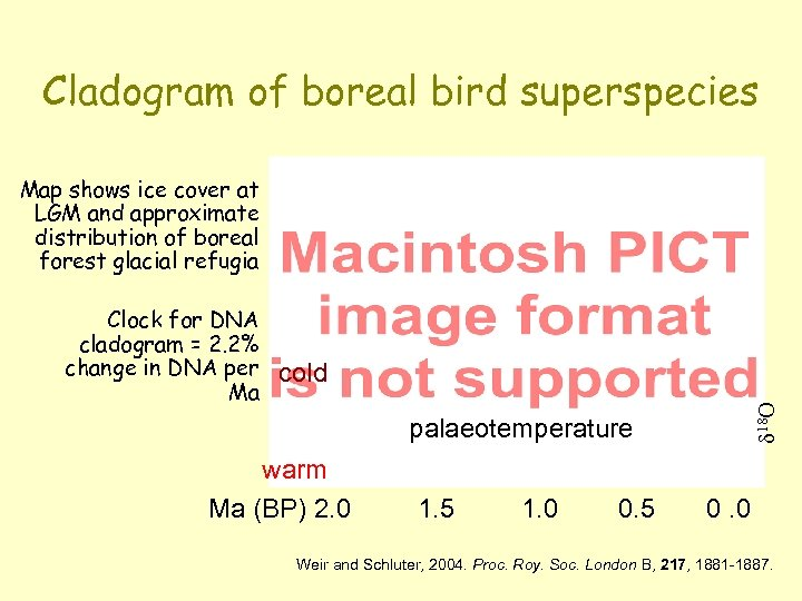 Cladogram of boreal bird superspecies Map shows ice cover at LGM and approximate distribution