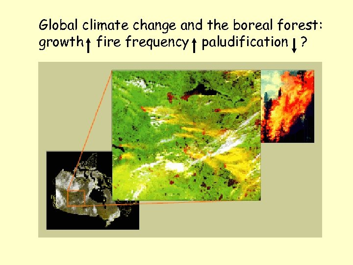 Global climate change and the boreal forest: growth fire frequency paludification ?