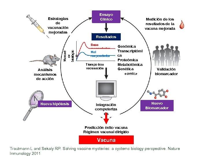 Estrategias de vacunación mejoradas Ensayo Clínico Medición de los resultados de la vacuna mejorada