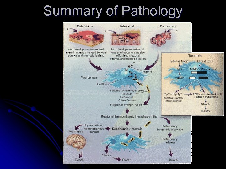 Summary of Pathology