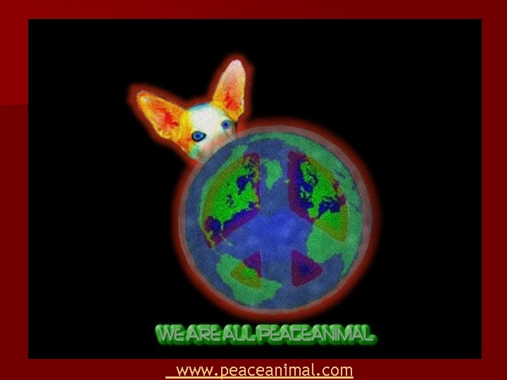 www. peaceanimal. com