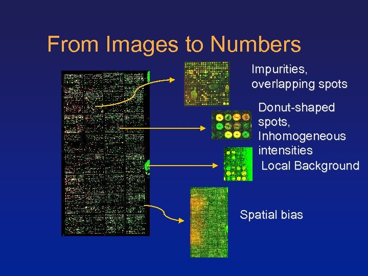 From Images to Numbers Impurities, overlapping spots Donut-shaped spots, Inhomogeneous intensities Local Background Spatial