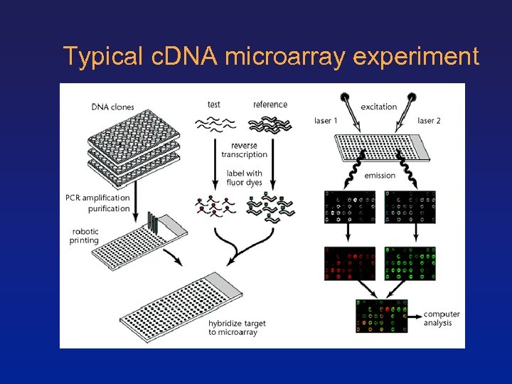 Typical c. DNA microarray experiment