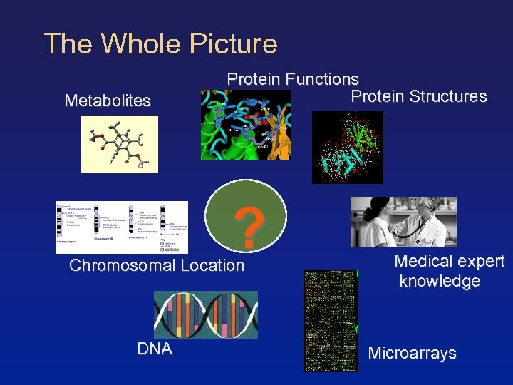 The Whole Picture Metabolites Protein Functions Protein Structures ? Chromosomal Location DNA Medical expert