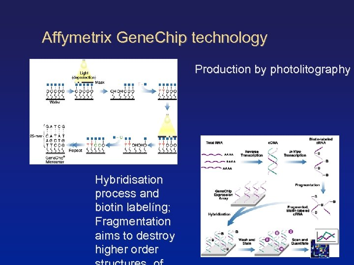 Affymetrix Gene. Chip technology Production by photolitography Hybridisation process and biotin labelíng; Fragmentation aims