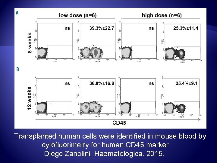 Transplanted human cells were identified in mouse blood by cytofluorimetry for human CD 45