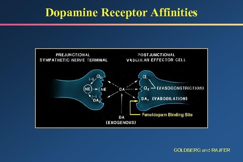 Dopamine Receptor Affinities GOLDBERG and RAJFER