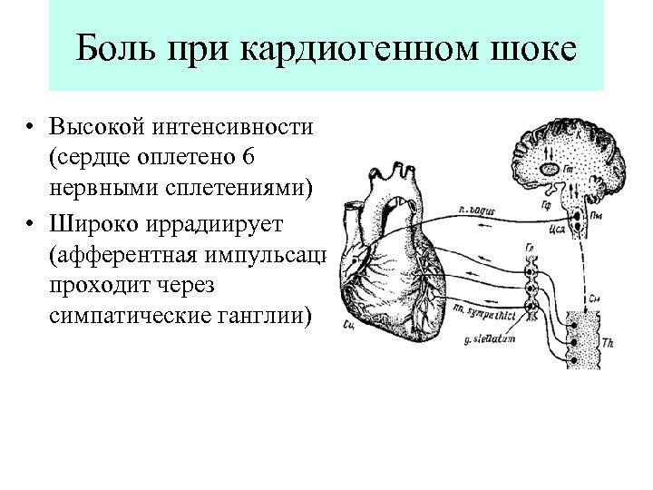 Боль при кардиогенном шоке • Высокой интенсивности (сердце оплетено 6 нервными сплетениями) • Широко