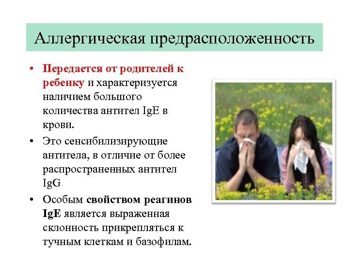 Аллергическая предрасположенность • Передается от родителей к ребенку и характеризуется наличием большого количества антител