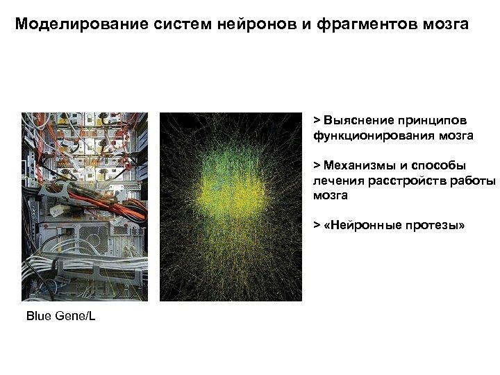 Моделирование систем нейронов и фрагментов мозга > Выяснение принципов функционирования мозга > Механизмы и