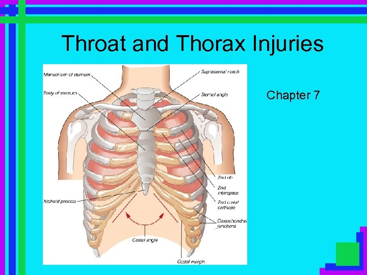 Throat and Thorax Injuries Chapter 7