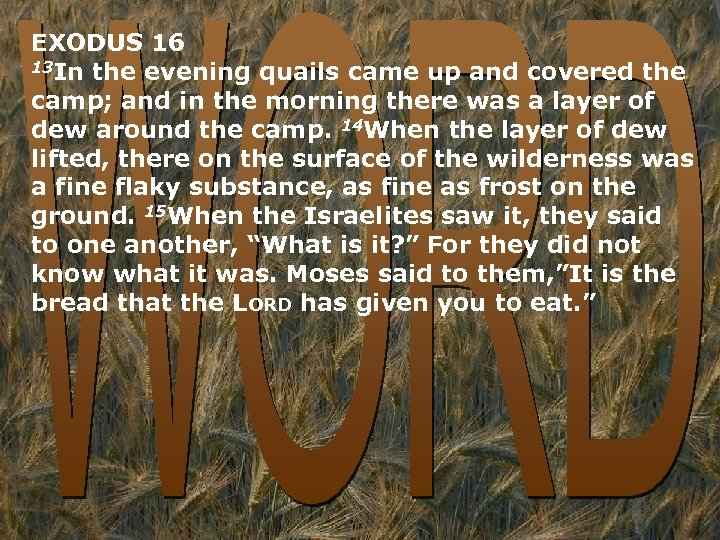 EXODUS 16 13 In the evening quails came up and covered the camp; and