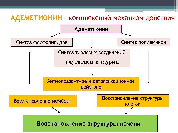 АДЕМЕТИОНИН - комплексный механизм действия. Адеметионин. Синтез фосфолипидов 35% Синтез полиаминов Синтез тиоловых соединений