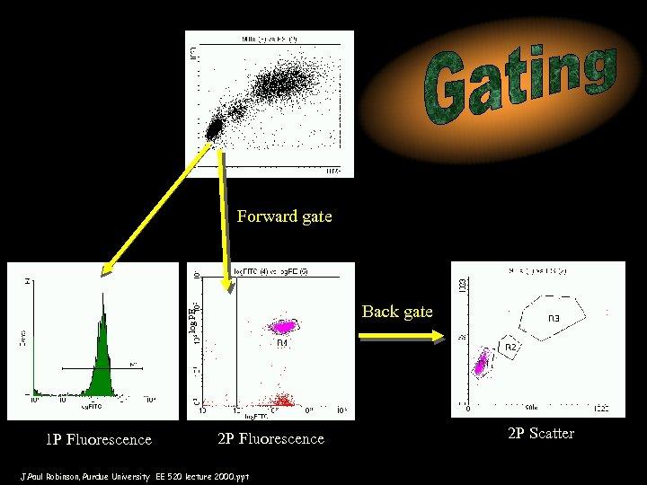 Forward gate log PE Back gate 1 P Fluorescence 2 P Fluorescence J. Paul
