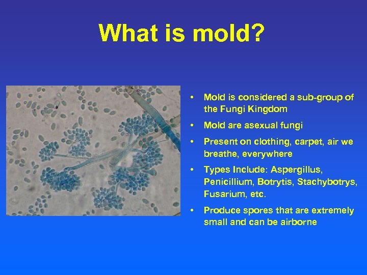 What is mold? • Mold is considered a sub-group of the Fungi Kingdom •