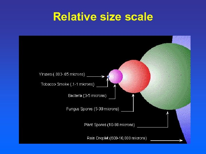 Relative size scale