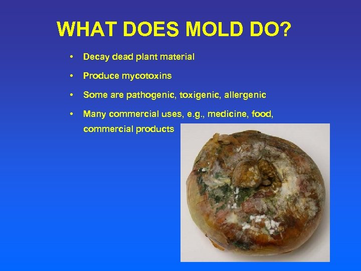 WHAT DOES MOLD DO? • Decay dead plant material • Produce mycotoxins • Some