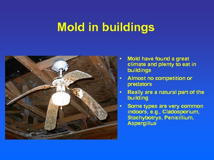 Mold in buildings • Mold have found a great climate and plenty to eat