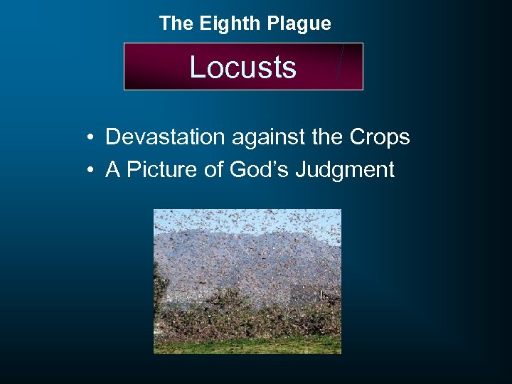 The Eighth Plague Locusts • Devastation against the Crops • A Picture of God's