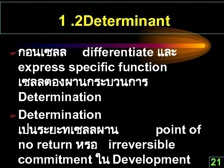 1. 2 Determinant กอนเซลล differentiate และ express specific function เซลลตองผานกระบวนการ Determination F Determination เปนระยะทเซลลผาน