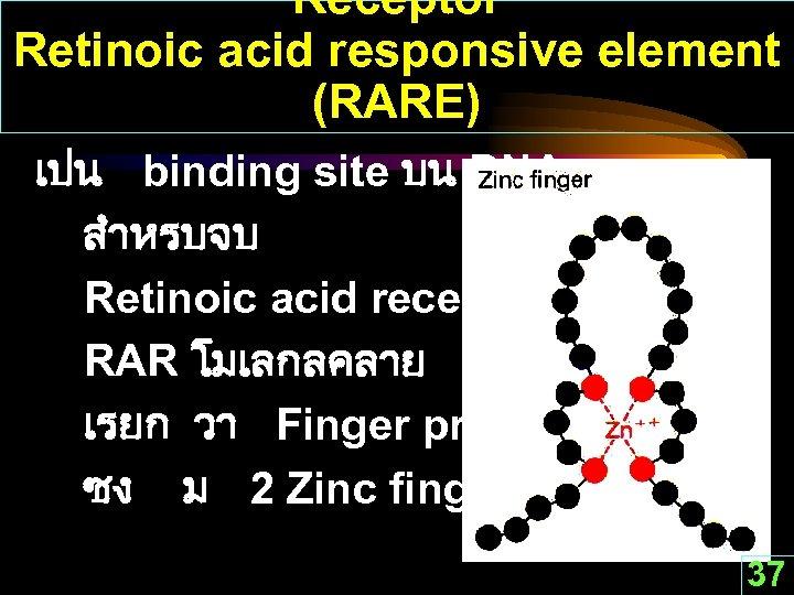 Receptor Retinoic acid responsive element (RARE) เปน binding site บน DNA สำหรบจบ Retinoic acid